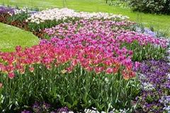 Πάρκο με τα λουλούδια τουλιπών Στοκ φωτογραφία με δικαίωμα ελεύθερης χρήσης