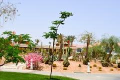 Πάρκο με την εξωτική τροπική έρημο κάκτων ενάντια στα άσπρα κτήρια πετρών στο μεξικάνικο λατινοαμερικάνικο ύφος ενάντια στο μπλε  στοκ εικόνα με δικαίωμα ελεύθερης χρήσης