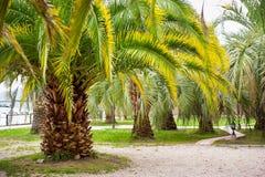 Πάρκο με τους τροπικούς φοίνικες στοκ εικόνα