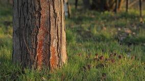 Πάρκο με το δέντρο και τη χλόη απόθεμα βίντεο
