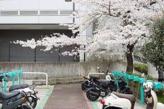 πάρκο μοτοσικλετών στοκ εικόνες