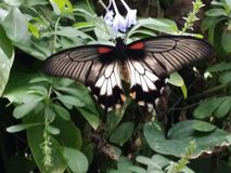 Πάρκο πεταλούδων Στοκ Εικόνες