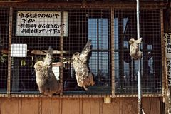 Πάρκο πιθήκων Iwatayama σε Arashiyama, Ιαπωνία στοκ φωτογραφία με δικαίωμα ελεύθερης χρήσης
