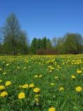 πάρκο πικραλίδων Στοκ φωτογραφία με δικαίωμα ελεύθερης χρήσης