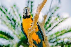 Πάρκο πουλιών του Μπαλί Ινδονησία Στοκ φωτογραφία με δικαίωμα ελεύθερης χρήσης
