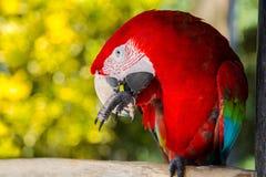 Πάρκο πουλιών του Μπαλί Ινδονησία Στοκ εικόνες με δικαίωμα ελεύθερης χρήσης