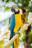 Πάρκο πουλιών του Μπαλί Ινδονησία Στοκ Εικόνα