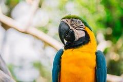 Πάρκο πουλιών του Μπαλί Ινδονησία Στοκ Εικόνες