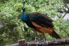 Πάρκο πουλιών της Μαλαισίας Κουάλα Λουμπούρ Στοκ φωτογραφίες με δικαίωμα ελεύθερης χρήσης