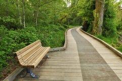 πάρκο πρωινού λιμνών ελαφιών στοκ φωτογραφίες με δικαίωμα ελεύθερης χρήσης