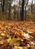 πάρκο πτώσης Στοκ φωτογραφία με δικαίωμα ελεύθερης χρήσης