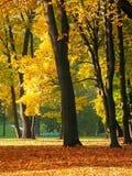 πάρκο πτώσης Στοκ Εικόνες