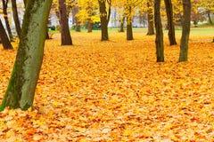 Πάρκο πτώσης gound Στοκ Εικόνες