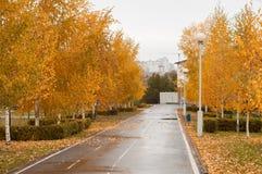 Πάρκο πόλεων πτώσης, φύλλο πτώσης, Στοκ εικόνες με δικαίωμα ελεύθερης χρήσης