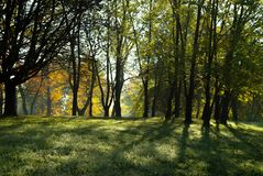 Πάρκο πόλεων το φθινόπωρο Στοκ εικόνες με δικαίωμα ελεύθερης χρήσης