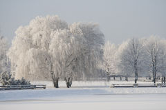 Πάρκο πόλεων το χειμώνα Στοκ εικόνα με δικαίωμα ελεύθερης χρήσης