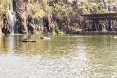 Πάρκο πόλεων Preto Ribeirao, ο Δρ aka Luis Carlos Raya Στοκ φωτογραφία με δικαίωμα ελεύθερης χρήσης