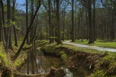 Πάρκο ρεικιών Στοκ εικόνα με δικαίωμα ελεύθερης χρήσης