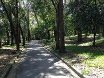 Πάρκο, Σάο Πάολο, πορεία, φύση, πρωί Στοκ Εικόνες