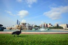 Πάρκο Σικάγο, Ηνωμένες Πολιτείες της Αμερικής επιχορήγησης πηγών Buckingham Στοκ Εικόνες