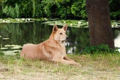 πάρκο σκυλιών Στοκ εικόνα με δικαίωμα ελεύθερης χρήσης