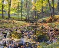 Πάρκο στα κόκκινα και πορτοκαλιά χρώματα Στοκ Εικόνες