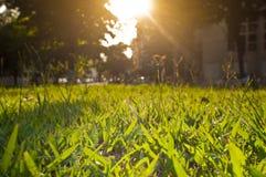 Πάρκο στην πορτοκαλιά χαμηλή άποψη ηλιοβασιλέματος στοκ φωτογραφία με δικαίωμα ελεύθερης χρήσης