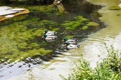 Πάρκο στη Ζυρίχη - την Ελβετία Στοκ Εικόνες