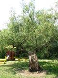 Πάρκο στο έλος Στοκ εικόνα με δικαίωμα ελεύθερης χρήσης