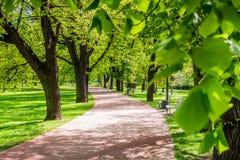 Πάρκο την άνοιξη με τον πράσινο χορτοτάπητα, φως ήλιων Πέτρινη διάβαση μέσα Στοκ Εικόνες