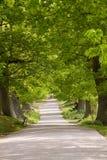 πάρκο της Αγγλίας ελαφιώ&n Στοκ φωτογραφία με δικαίωμα ελεύθερης χρήσης