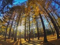 Πάρκο της Ιαπωνίας το φθινόπωρο Στοκ Εικόνες