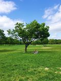 Πάρκο της Ιαπωνίας Στοκ Εικόνα