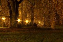 Πάρκο τη νύχτα Στοκ εικόνα με δικαίωμα ελεύθερης χρήσης