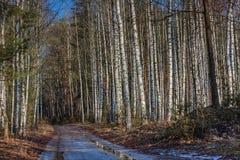 Πάρκο τοπίων την πρώιμη άνοιξη Στοκ φωτογραφίες με δικαίωμα ελεύθερης χρήσης