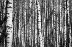 Πάρκο τοπίων την πρώιμη άνοιξη Στοκ εικόνες με δικαίωμα ελεύθερης χρήσης