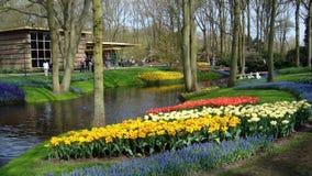 Πάρκο του Άμστερνταμ Keukenhof Στοκ φωτογραφίες με δικαίωμα ελεύθερης χρήσης