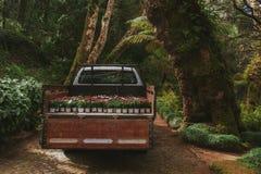 Πάρκο του παλατιού Pena σε Sintra, Πορτογαλία Τροπικό δάσος με τις άγριες φτέρες στοκ φωτογραφία