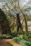 Πάρκο του παλατιού Pena σε Sintra, Πορτογαλία Τροπικό δάσος με τις άγριες φτέρες στοκ φωτογραφίες