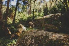 Πάρκο του παλατιού Pena σε Sintra, Πορτογαλία Τροπικό δάσος με τις άγριες φτέρες στοκ εικόνες με δικαίωμα ελεύθερης χρήσης