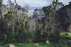 Πάρκο του παλατιού Pena σε Sintra, Πορτογαλία Τροπικό δάσος με τις άγριες φτέρες στοκ εικόνα