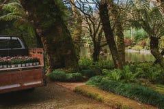 Πάρκο του παλατιού Pena σε Sintra, Πορτογαλία Τροπικό δάσος με τις άγριες φτέρες στοκ εικόνα με δικαίωμα ελεύθερης χρήσης