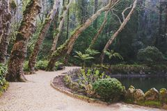 Πάρκο του παλατιού Pena σε Sintra, Πορτογαλία Τροπικό δάσος με τις άγριες φτέρες στοκ φωτογραφία με δικαίωμα ελεύθερης χρήσης