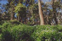 Πάρκο του παλατιού Pena σε Sintra, Πορτογαλία Τροπικό δάσος με τις άγριες φτέρες στοκ εικόνες