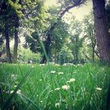 Πάρκο του Παρισιού την άνοιξη Στοκ εικόνα με δικαίωμα ελεύθερης χρήσης