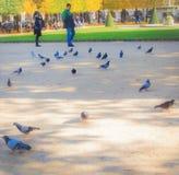 πάρκο του Παρισιού Στοκ Εικόνα