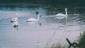 Πάρκο του Ρίτσμοντ στοκ εικόνες με δικαίωμα ελεύθερης χρήσης