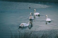 Πάρκο του Ρίτσμοντ Στοκ φωτογραφία με δικαίωμα ελεύθερης χρήσης