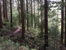 Πάρκο του Forrest στοκ φωτογραφίες με δικαίωμα ελεύθερης χρήσης