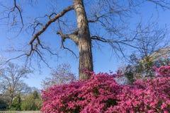 Πάρκο του Fred Fletcher το Μάρτιο στοκ εικόνα